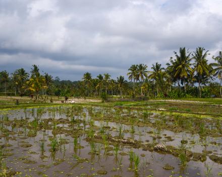 Bali-© Inge De Paepe